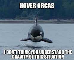 orca-28418.png